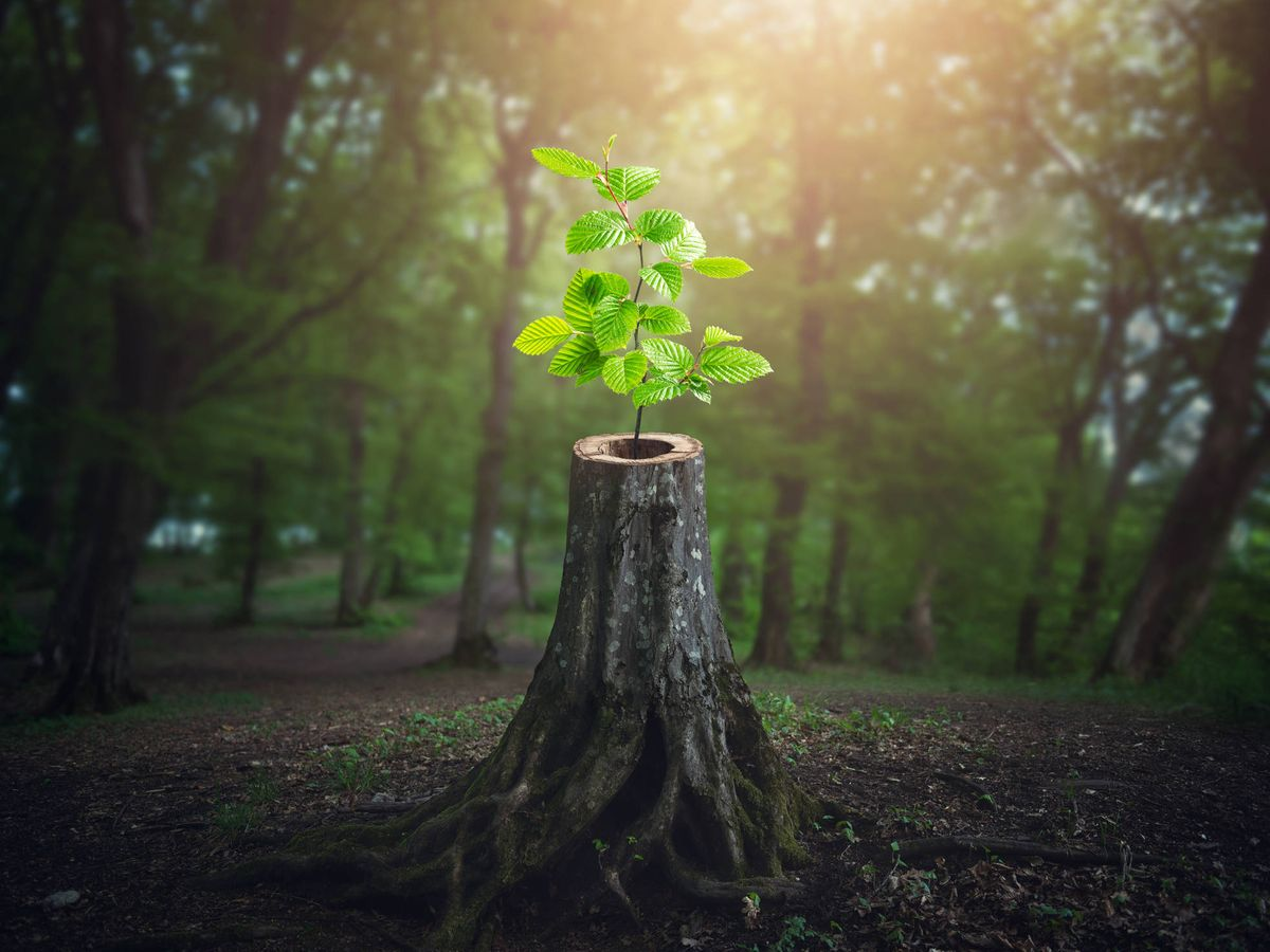 Cómo ser resilientes sin caer en los tópicos de la industria de la felicidad