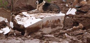 Post de Reino Unido prohibirá por ley los criaderos de perros y gatos