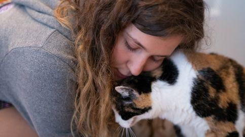 ¿Por qué tu gato se restriega por tu cara cuando menos te lo esperas?