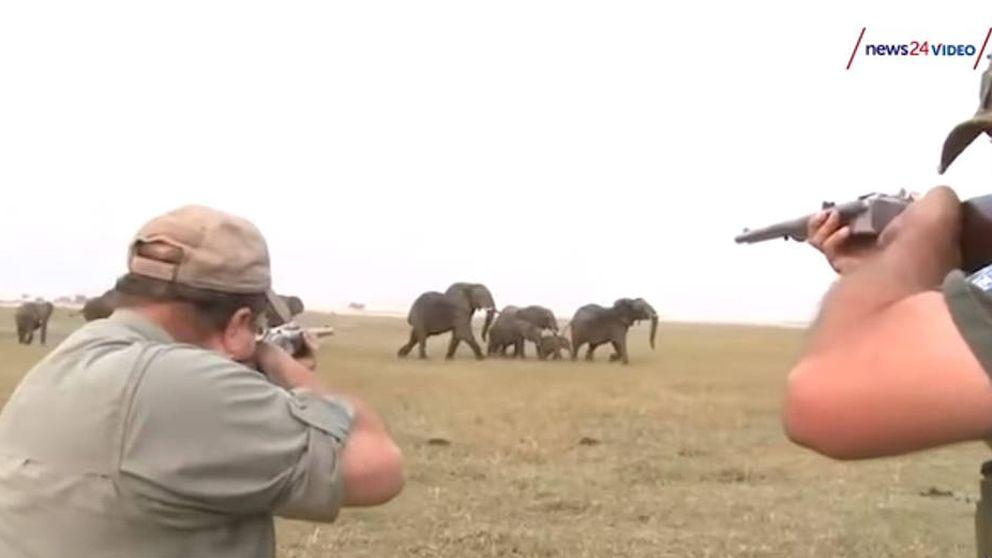 Una manada de elefantes carga contra 2 cazadores por matar a uno de los suyos