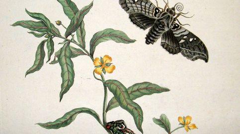 Susan Fenimore Cooper, la joya oculta de la literatura rural que enamoró a Darwin