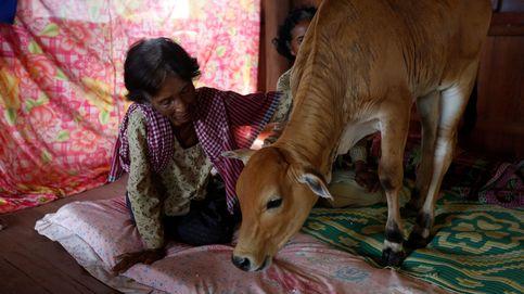 La viuda camboyana que reencontró a su marido en una vaca