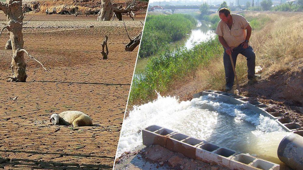 Foto: A la izquierda, una oveja muerta en la cabecera del Tajo. A la derecha, un hombre junto a un sondeo en Murcia.