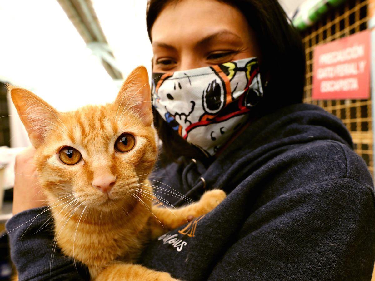 Foto: Los gatos han cambiado su comportamiento durante el confinamiento. Foto: EFE Mauricio Dueñas Castañeda