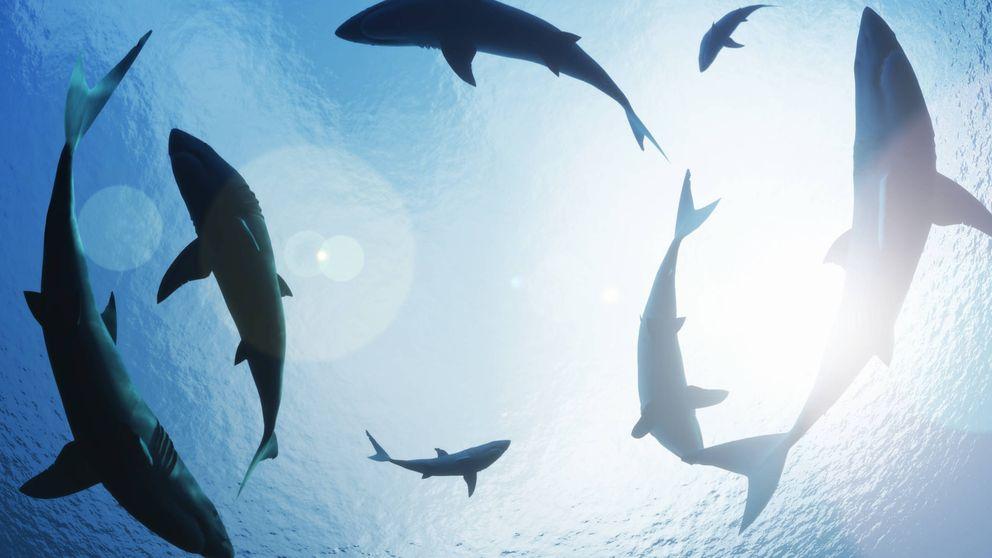 El genial acertijo de los peces y tiburones propuesto por un profesor del año