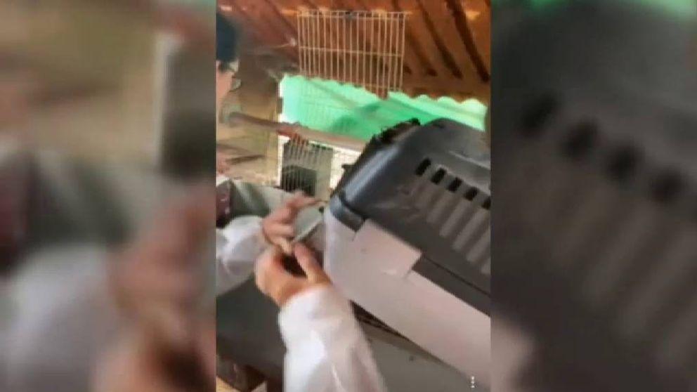 Momentos de tensión en una acción animalista contra una granja de conejos en Barcelona