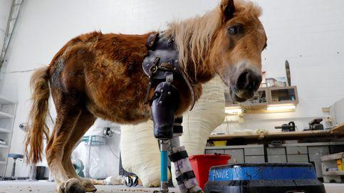 Derrick Campana, el especialista que ayuda a los animales a caminar de nuevo