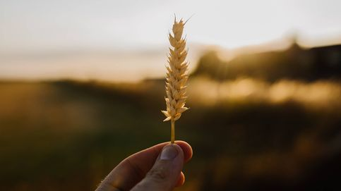 Sensibilidad al gluten y celiaquía, ¿cuál es la diferencia?