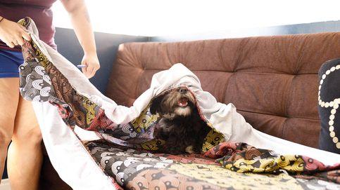 Funda sofá elástica: las mejores, cuál comprar al mejor precio