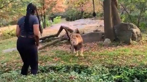 Una mujer se cuela en el foso de los leones de un zoo para grabar un vídeo