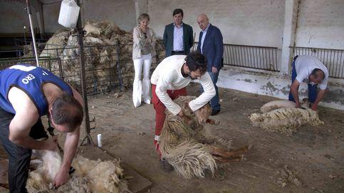 Solo el 14% de las 7.800 granjas de Madrid tiene asegurados sus animales y cultivos