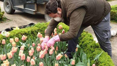 Tulipanes para agradecer a los sanitarios de Madrid sus esfuerzos contra el coronavirus