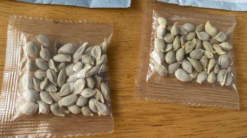 El misterio de las semillas desconocidas que llegan desde China a Estados Unidos