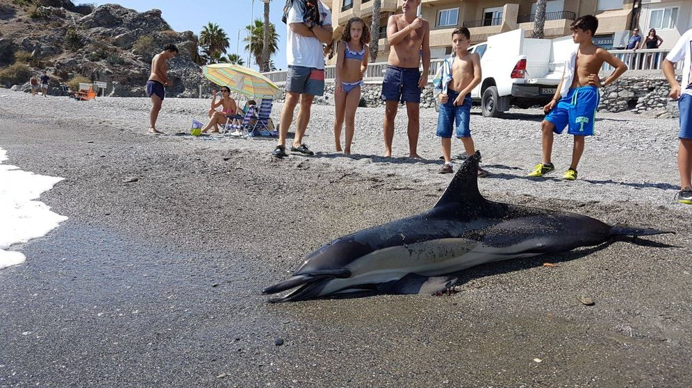 Foto: Delfín encontrado en septiembre de 2017 en la costa de Granada (Ayuntamiento de Almuñécar)