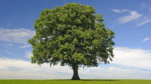 Cómo el boom renovable español ha hecho de oro al 'hedge fund' Oaktree con Eolia