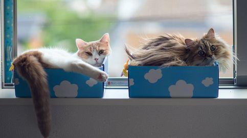 El gato de Schrödinger está vivo, muerto y en dos sitios al mismo tiempo