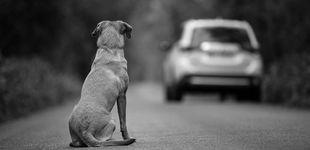Post de Conciencia y formación: el abandono de mascotas después del confinamiento