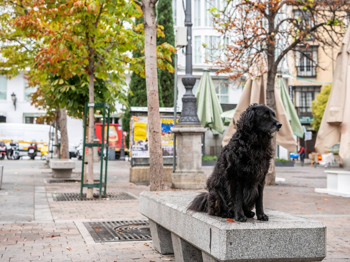Foto: Perro negro en la Plaza Santa Ana en Madrid (Fuente: iStock)