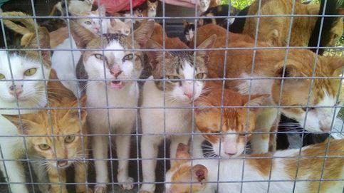 El mercado de carne de gatos en Vietnam