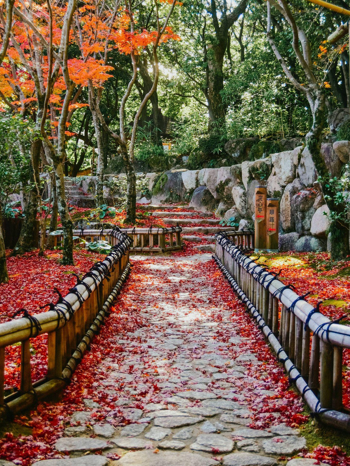 Método japonés Hanasaki para la longevidad. (Juliana Barquero para Unsplash)