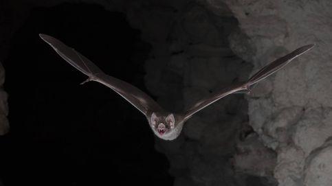 Los riesgos de ser vampiro: esto le pasa a tu cuerpo cuando sólo vives a base de sangre