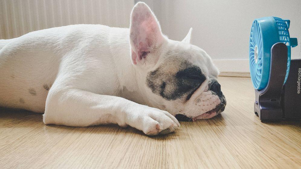 Foto: Un perro se tumba frente a un ventilador. (iStock)