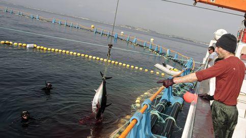 Los pesqueros españoles en aguas del Sáhara tienen los días contados (entre dos meses y un año)