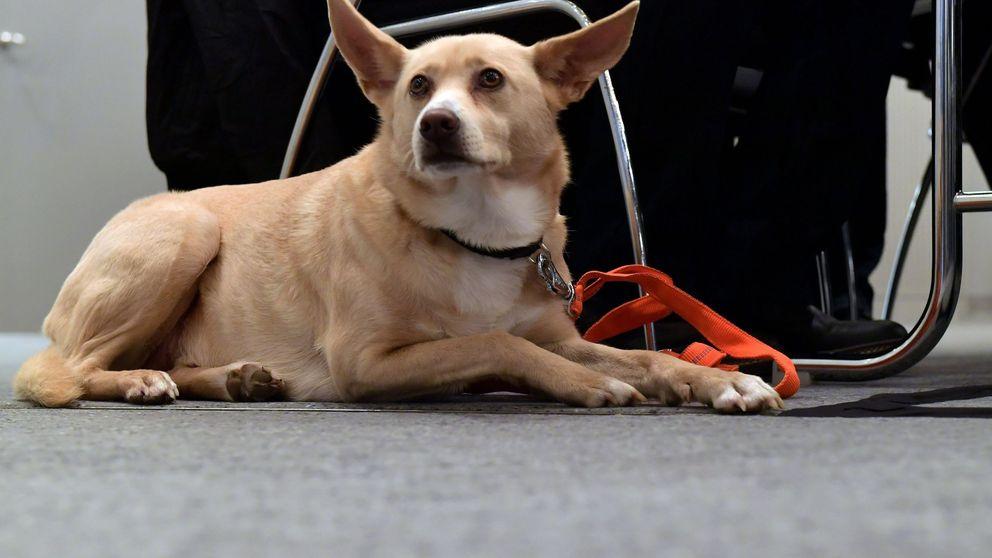 Un año de cárcel por tirar a su perra a un contenedor dentro de una maleta