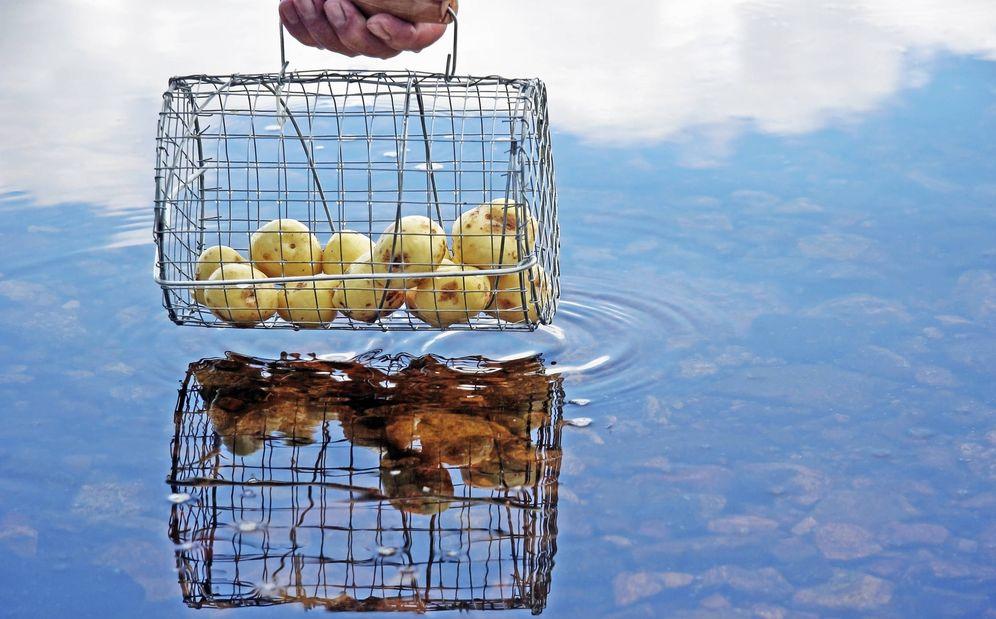 Foto: Las patatas son para los finlandeses la promesa del verano.