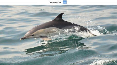 El delfín, la maravilla animal venida del Atlántico