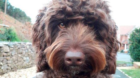 Un perro de terapia salva a una mujer de cometer un suicidio