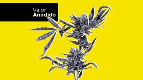 Marihuana, el tabú de la inversión que avanza a pasos agigantados
