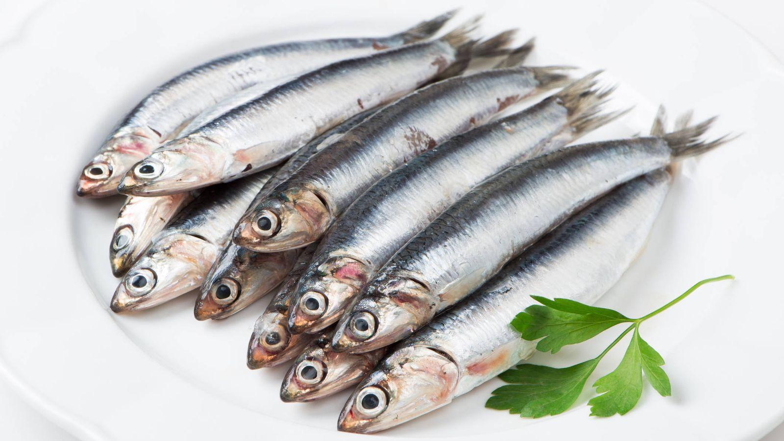 Pescado azul: ¿Pescado azul o pescado blanco? Cómo diferenciarlos y cuáles son sus beneficios