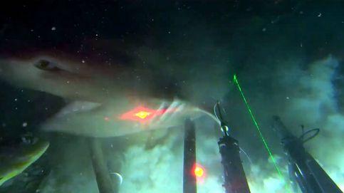 Consiguen poner un GPS al tiburón de seis branquias, el dominador del océano