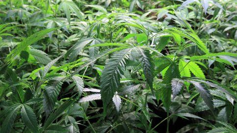 Así es la nueva macroplanta de marihuana en Portugal: 15.000 m y 62 toneladas al año