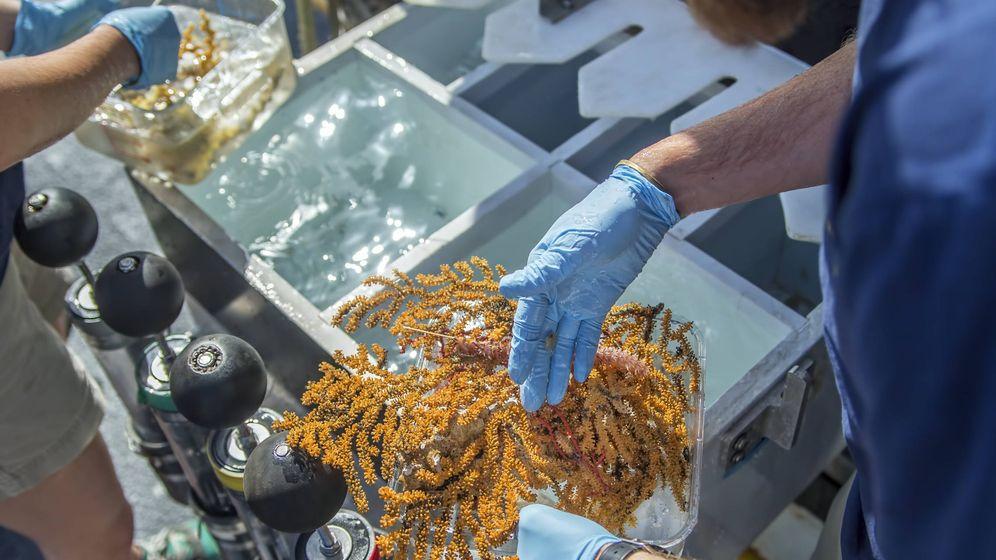 Foto: Uno de los especímenes encontrados en el fondo del mar. Foto: Ocean Exploration Trust /Nautilus Live.