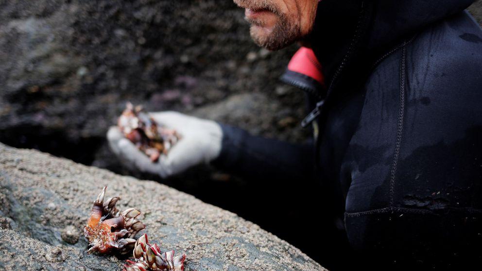 Espectacular rescate de tres percebeiros en Galicia