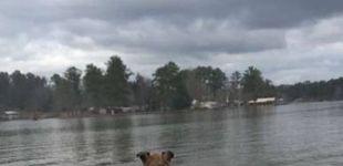 Post de Aparece un perro callejero en su casa... lo que hizo restaura tu fe en la humanidad
