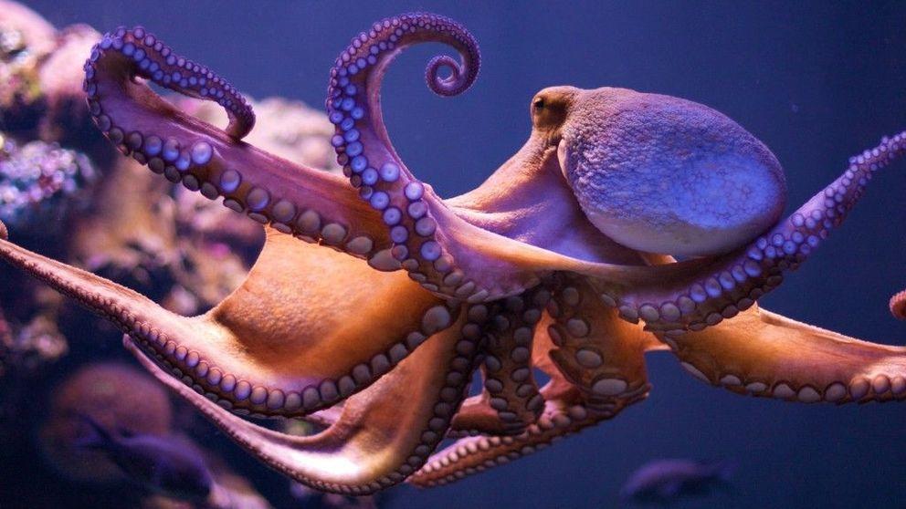 Inteligencia animal: doce ejemplos de que no somos los únicos listos del planeta
