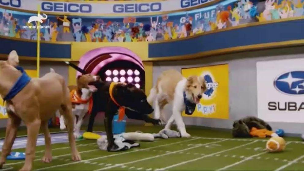 Todo listo para una Super Bowl canina y solidaria
