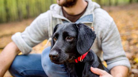 5 razones por las que todo hombre debería tener un perro