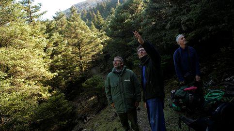 Un oasis de biodiversidad en Sierra de las Nieves, el futuro parque nacional