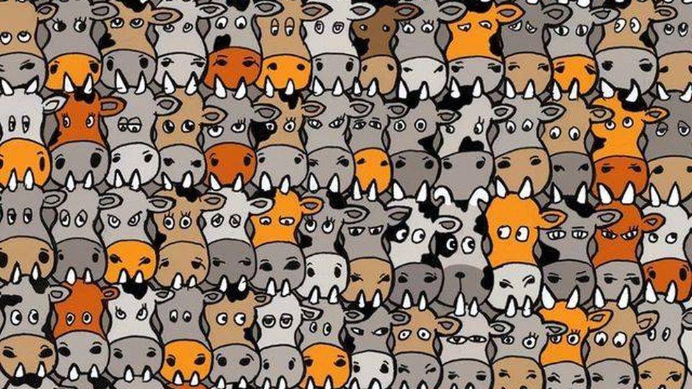 El último reto visual: ¿eres capaz de encontrar al perro entre estas vacas?