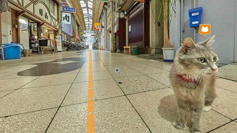 Japón crea un 'Street View' solo para gatos