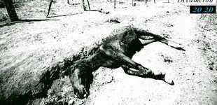 Post de Muerte de un caballo (un relato)