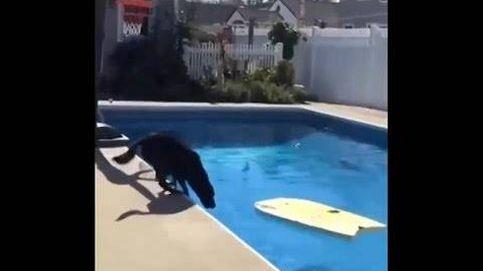 Un perro trata de subirse a la tabla y esto es lo que pasa
