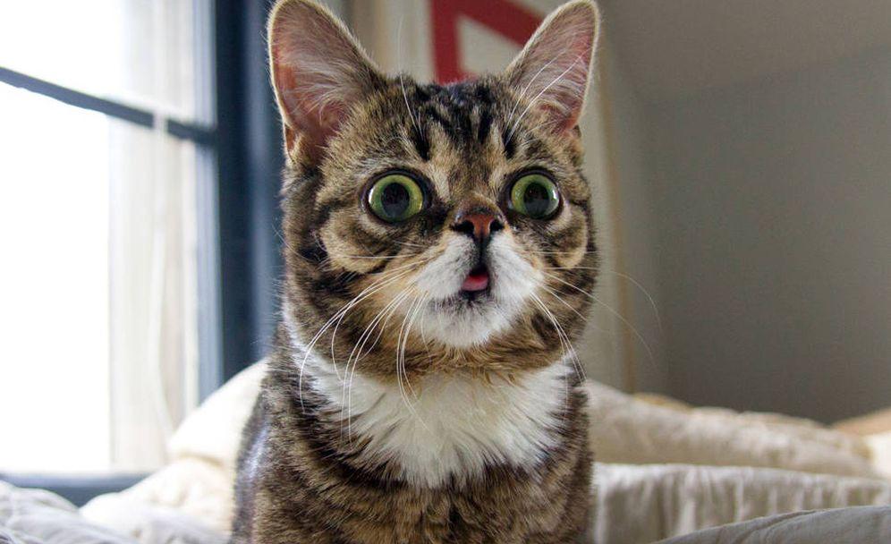 Foto: La 'influencer' Lil Bub