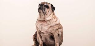 Post de Signos sutiles de que tu mascota está gorda, según los veterinarios