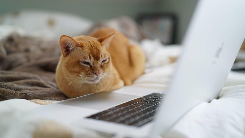 10 consejos de expertos en ciberseguridad para evitar problemas navegando por la red