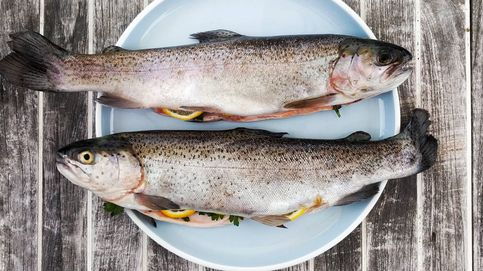 Pasteles de pescado: una forma diferente de saborear los frutos marinos